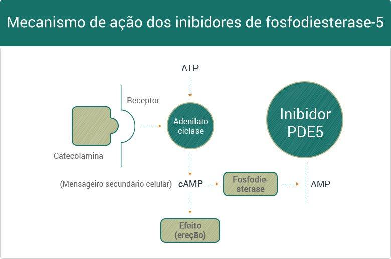 mecanismo dos fosfodiesterase tipo 5