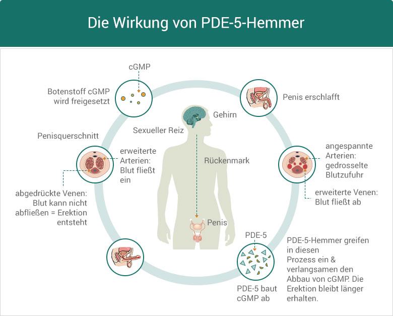 Die Wirkung von PDE-5-Hemmer