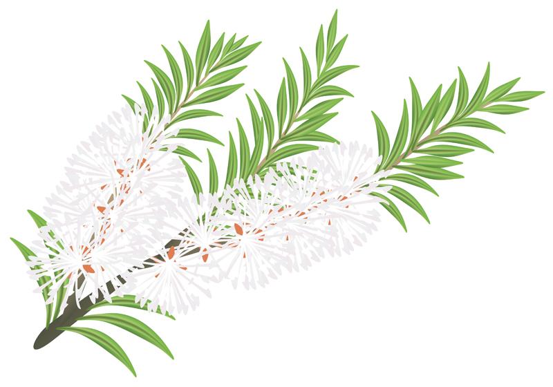 Teebaumöl gegen Feigwarzen