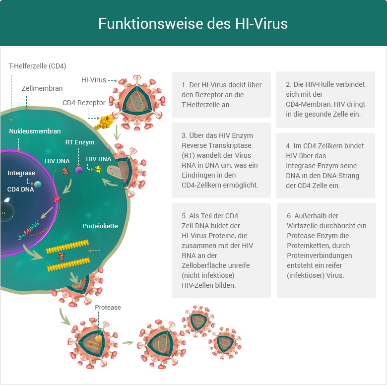 Funktionsweise des HI Virus