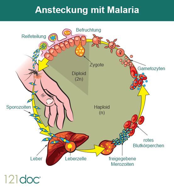 malaria_mit