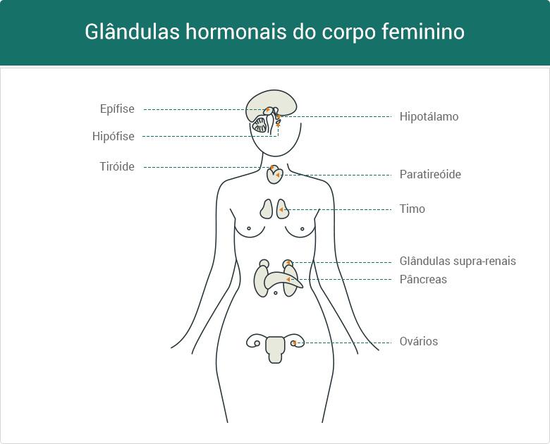 glândulas hormonais do corpo feminino