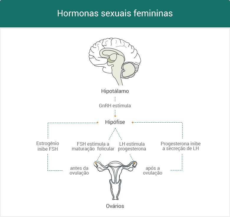 hormonas sexuais femininas